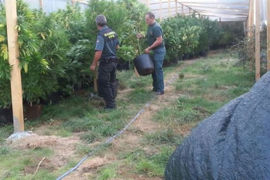 Plantación en Trasmiras