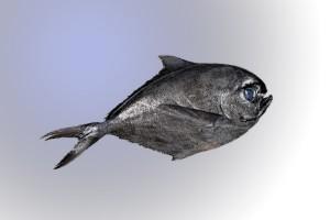 castaneta-1