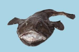 peixe-sapo
