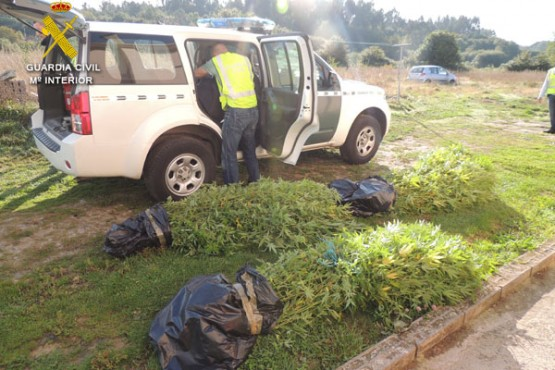 Plantas incautadas
