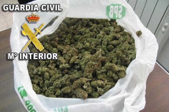 Marihuana requisada