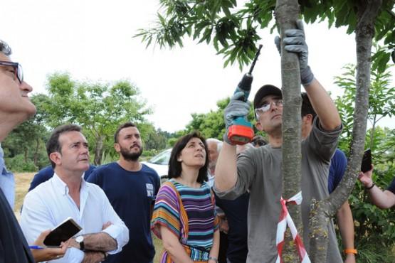 Ángeles Vázquez supervisa os traballos contra o chancro castiñeiro en Riós