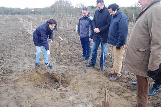 Ángeles Vázquez plantando carballos en Trasmirás
