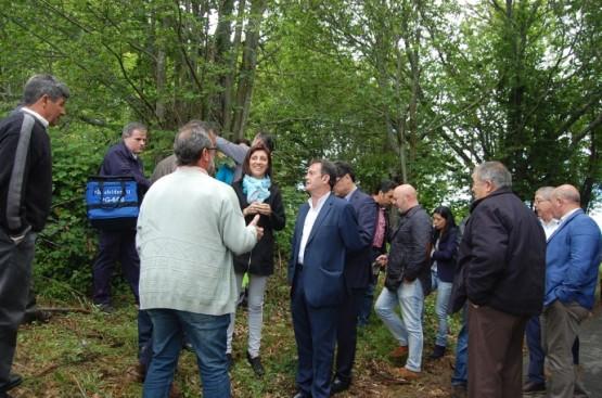 Medio Rural reforza en Ourense a loita contra a avespiña do castiñeiro pola importancia deste cultivo na provincia