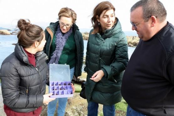 A Xunta solta en Carnota 575 xuvenís de lumbrigante para contribuír a aumentar a poboación da especie
